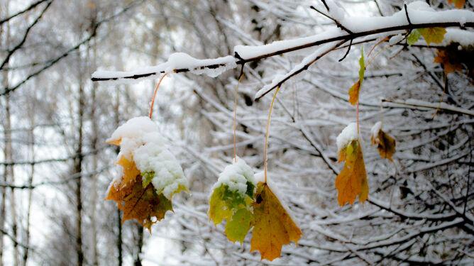 Pogodowa przeplatanka. <br />Walkę z jesienią będzie wygrywać zima