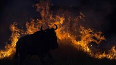 """Fleeing the flames"" Greg Du Toit, RPA"