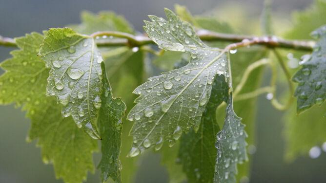 Pogoda na jutro: czwartek lokalnie przyniesie deszcz. Do 25 stopni