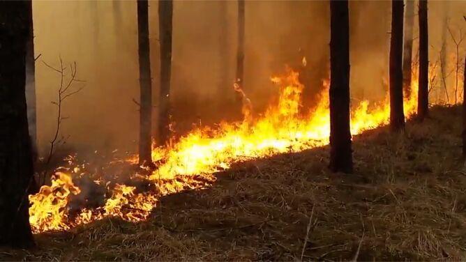 Ponad 1500 pożarów traw w weekend. <br />Strażacy apelują o rozwagę