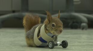 Nowe życie dla wiewiórki
